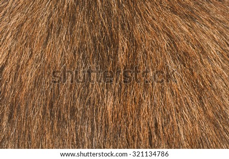 Brown dog fur texture or background - stock photo