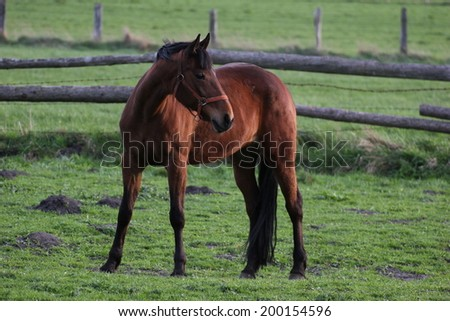 Brown horse grazing on a farm in Greifswald, Mecklenburg-Vorpommern, Germany.