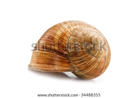 brown snail isolated on white