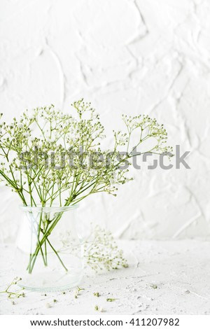 Bunch of Gypsophila, Baby's-breath flowers, in glass vase on white background. - stock photo