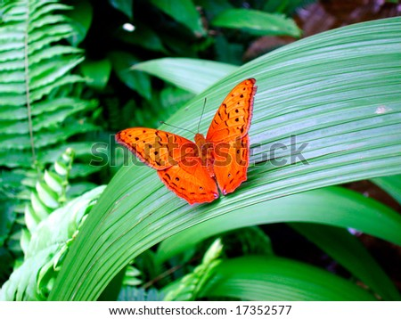 Butterfly - monarch - stock photo