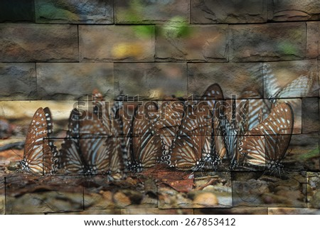 """""""butterfly"""" The brick painting concept. - stock photo"""