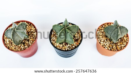 - cactus in pots on White background. - isolated - stock photo