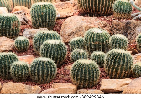 Cactus ,plants, desert plants,nature. - stock photo