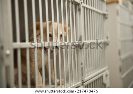 Cages in a dog kennel - stock photo