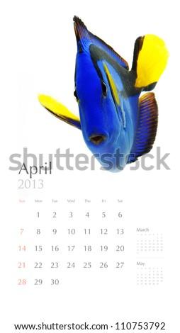 2013 calendar, sea marine life concept - stock photo