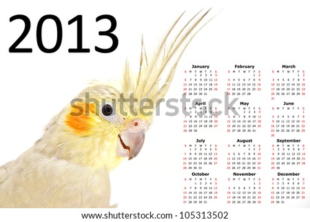 2013 Calendar with a Cockatiel - stock photo