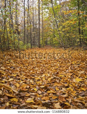 """Carpet of Leaves"" Fallen  leaves along a trail in a park in Monmouth County, New Jersey."