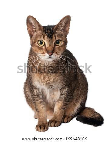 Cat in studio with curiosity looks - stock photo
