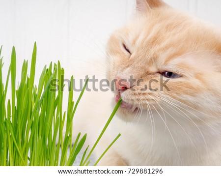 Cat Eating Ball Of Dust