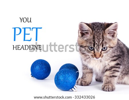 cat isolated on white background. Place for text - stock photo