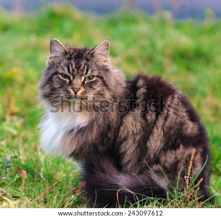 cat on a grass  - stock photo