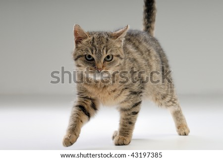 Cat posing - stock photo