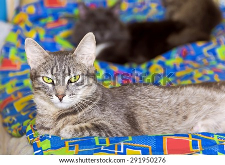 Cat with green eyes lying on a colorful blanket. - stock photo