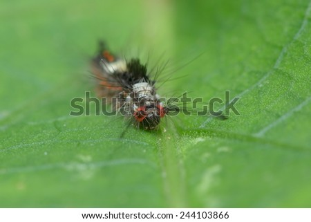 Caterpillar on a green leaf - stock photo