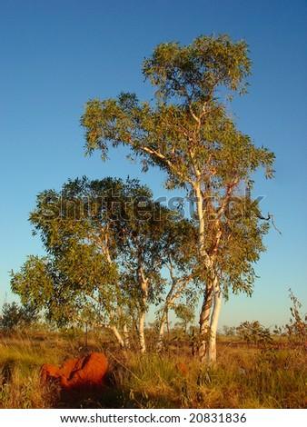 Central Australia - stock photo