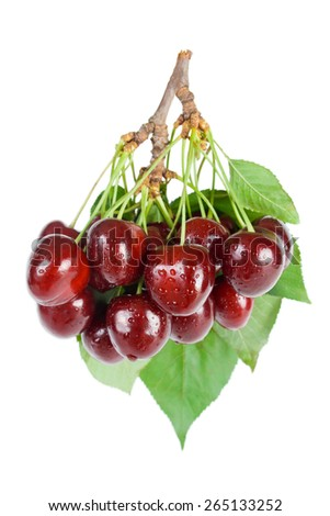 Cherries.Bunch of fresh ripe wet cherries close-up with leaves and stems isolated on white background. - stock photo