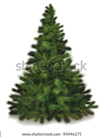 Christmas tree. Realistic illustration of fluffy pine tree.