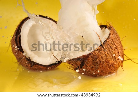 Coconut with coconut milk splash on yellow close up