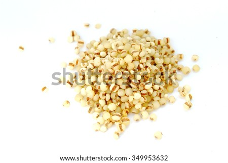 coix seeds studio shot  Latin name Coix chinensis Tod.  - stock photo