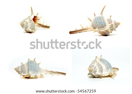 Collection of shells isolated on white - stock photo