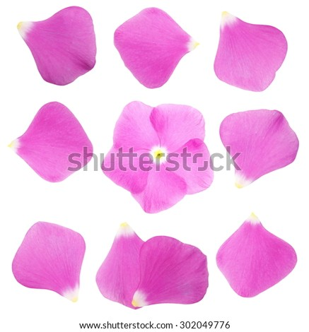 collection pink petals impatiens flower isolated on white background, with clipping path - stock photo
