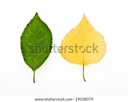 colorful autumn leaves isolated on white - stock photo