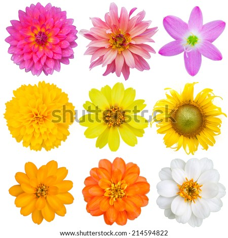 9 colorful flowers on white isolate background