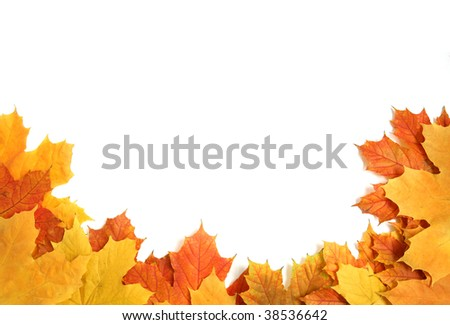 colorful frame made from an autumn leafs