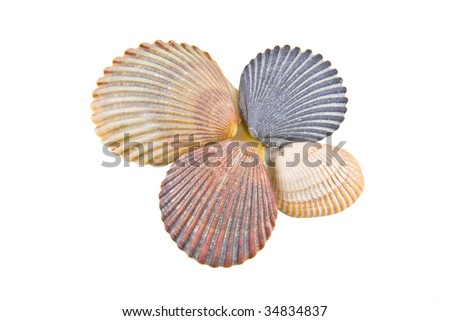 4 Colorful seashells isloated on a white background