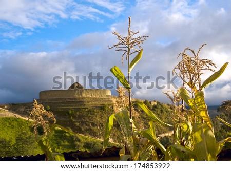 "Cornfield near the ruins of the Inca fortress  Ingapirca, Ecuador. Ingapirca (Kichwa: Inkapirka, ""Inca wall""), town in Caniar Province, Ecuador and the name of an Incan archeological site - stock photo"