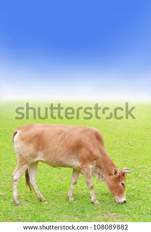 cow on green grass, farmland and blue sky - stock photo