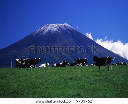 Cows take rest in grassy plain with Mt, Fuji - stock photo