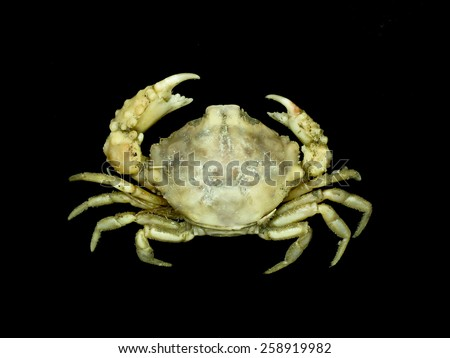 Crab on black background  - stock photo