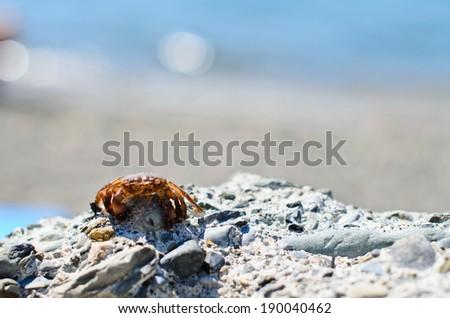 crab on rocks - stock photo