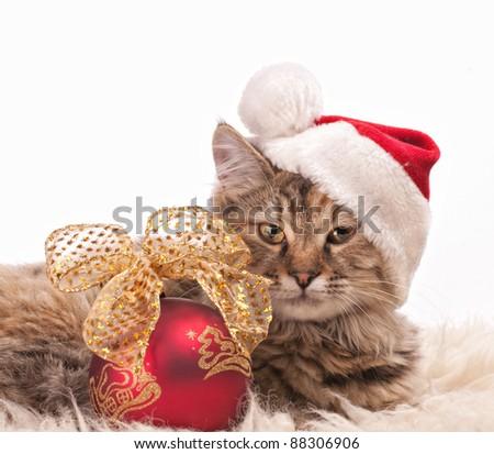 Cute cat in santa's cap with Christmas ball - stock photo
