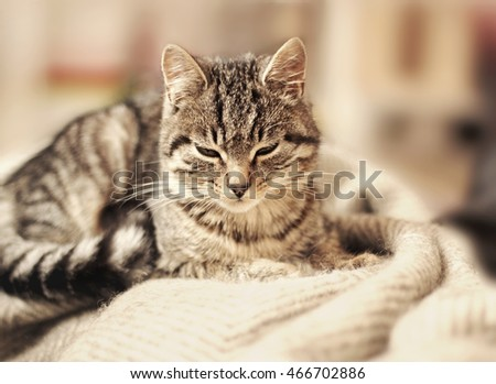 Cute cat lying on bed