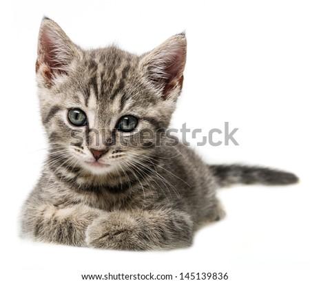 cute little kitten portrait - stock photo