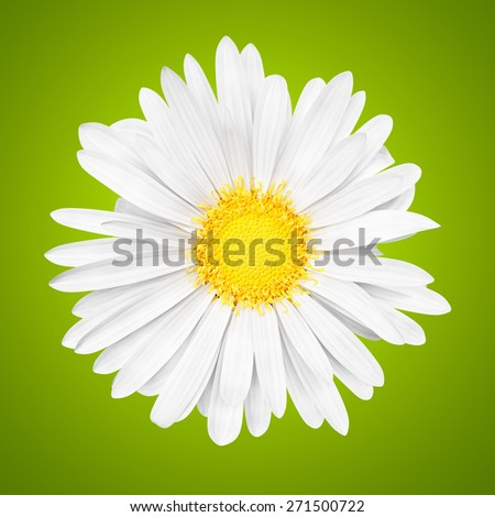 3D abstract sunny white daisy flower on green background - stock photo
