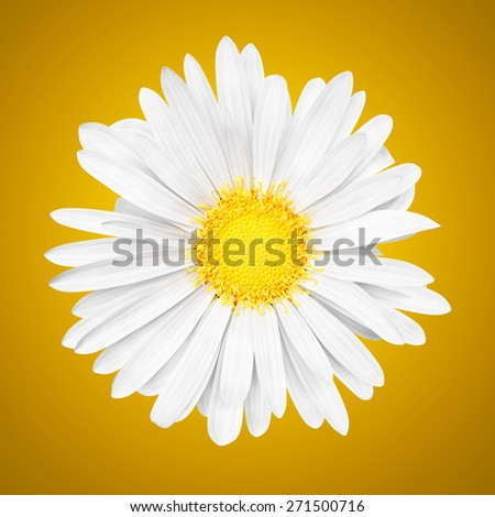 3D abstract sunny white daisy flower on yellow background - stock photo