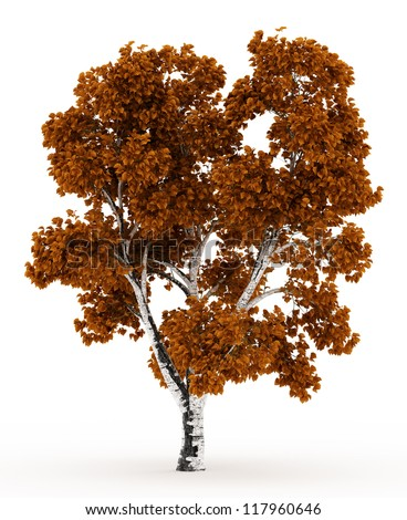 3d Birch tree in autumn with yellow leaves isolated over white - stock photo