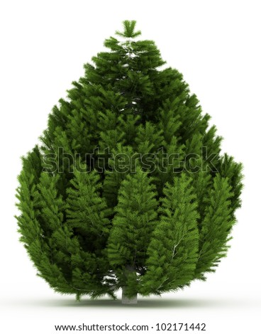 3d Bosnian Pine tree isolated over white