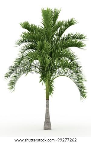 3d Carpoxylon Palm isolated over white - stock photo
