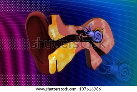 3d cross section of ear. inner ear - stock photo