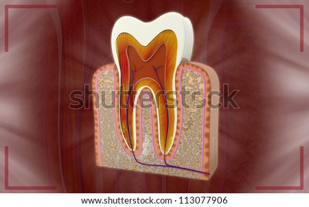 3D cross section of teeth - stock photo