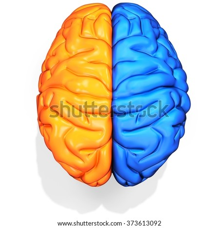 3d detailed brain sides on white background - stock photo