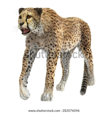 3D digital render of a big cat cheetah isolated on white background