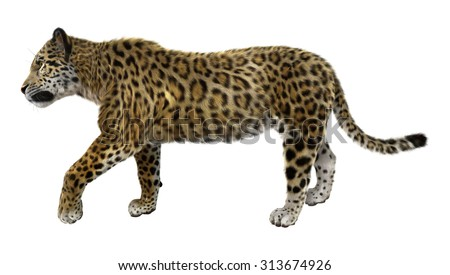 3D digital render of a big cat jaguar walking isolated on white background