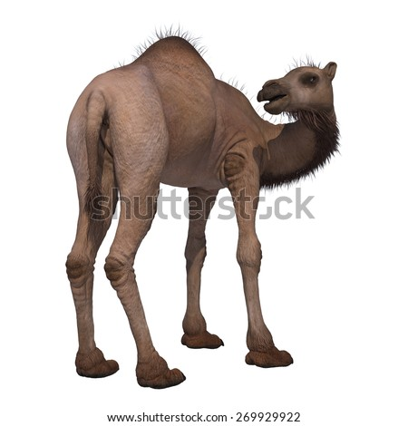 3D digital render of a camel isolated on white background