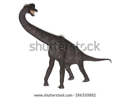 3D digital render of a dinosaur Brachiosaurus isolated on white background - stock photo